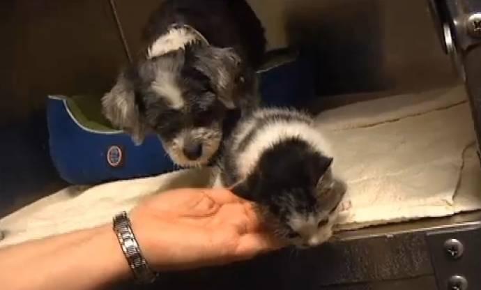 Маленькая собачка нашла и усыновила брошенного котенка