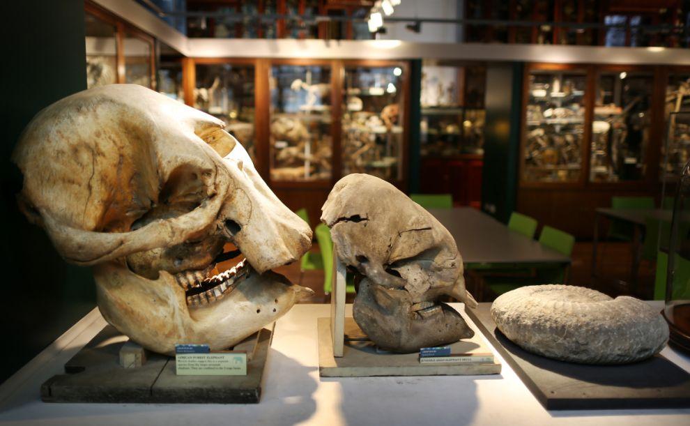 gmoz31 Лондонский музей зоологии и сравнительной анатомии Гранта