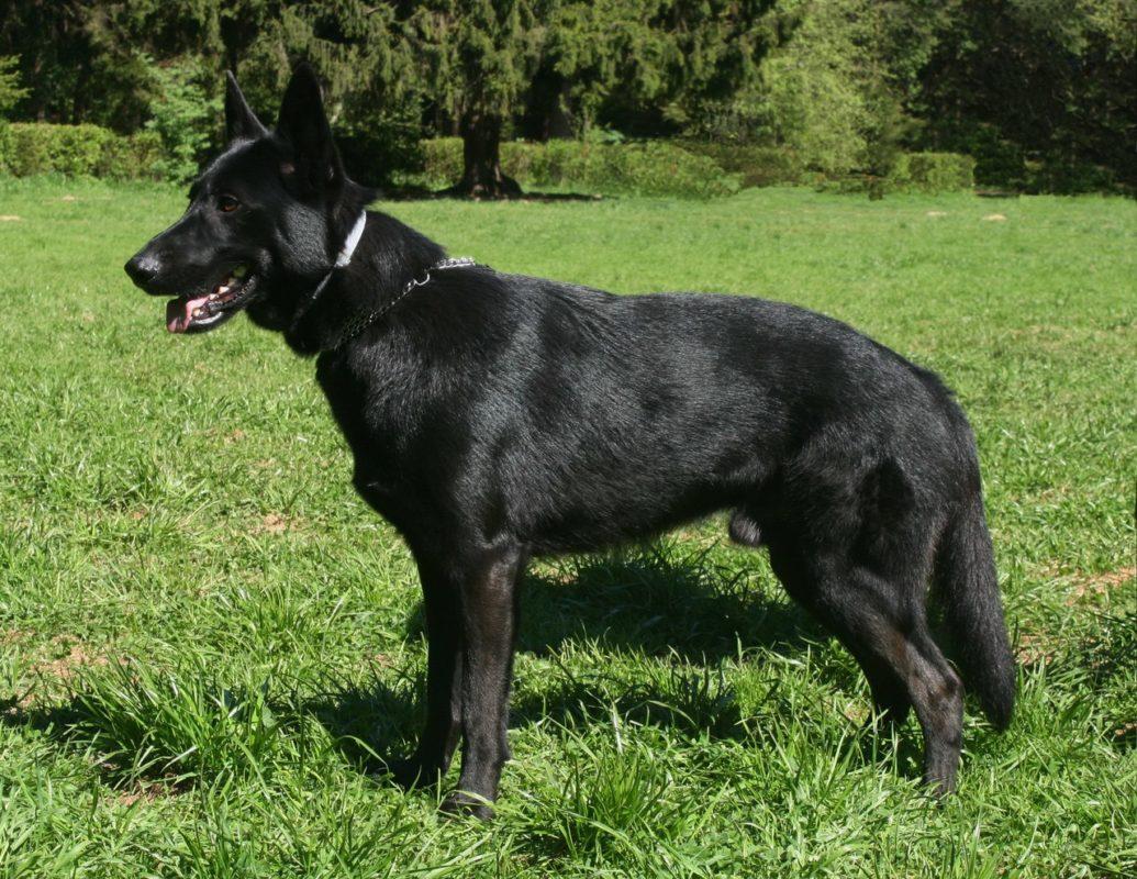 Среди 3000 собак девушка выбрала ЕГО… Приютский пёс боялся всего на свете, но его жизнь изменилась!...