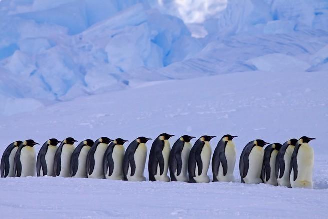 Сбежавшая из Московского зоопарка стая пингвинов обнаружена неподалёку от Вологды
