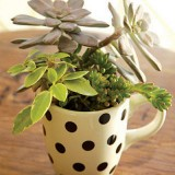 succulent-garden-in-home-and-outdoor2-11