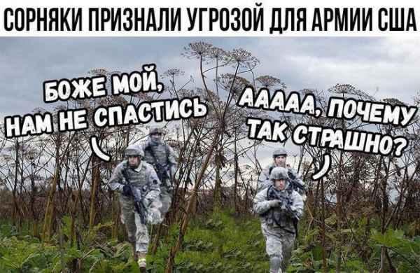 Русский чертополох ведет войну против американских военных