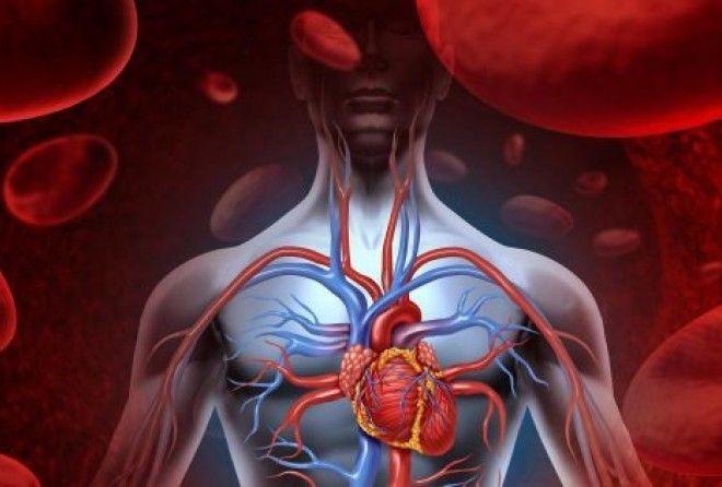 Опусти ладони в воду и узнай, как работает твоя кровеносная система