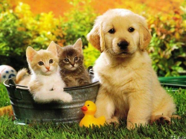 Домашние животные не болеют …