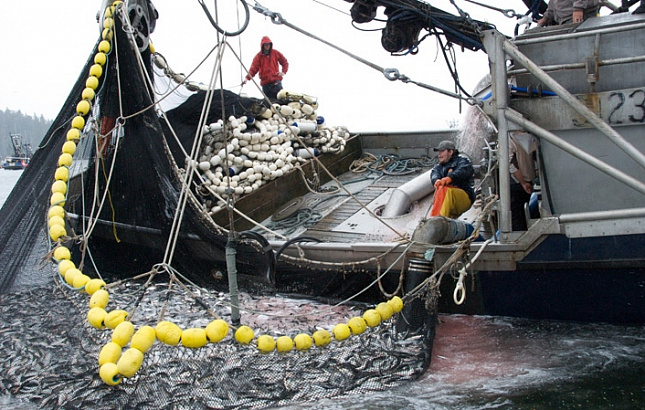 На Сахалине фиксируют массовую гибель рыбы