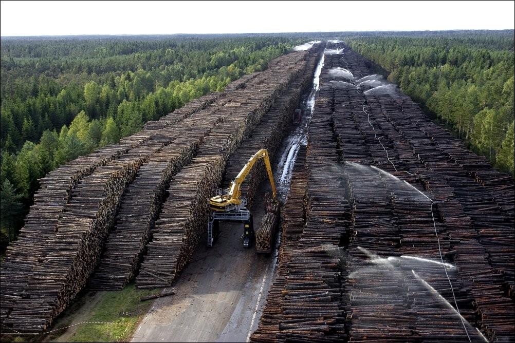 О том, как китайцы весь лес вывезли