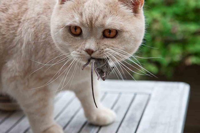 Доказано: без кота жизнь не та