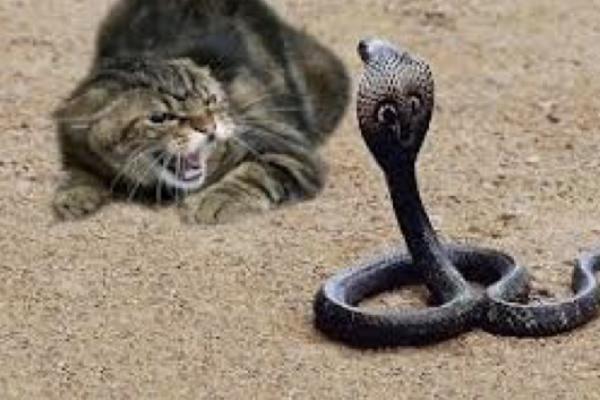 Кот в деле: домашний хищник …