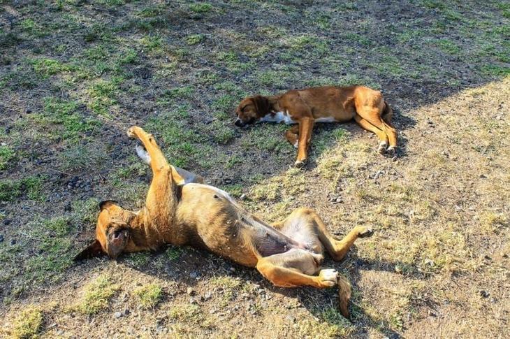 Лапы вверх! животные, мило, питомцы, подборка, смешное, собаки, сон, фото