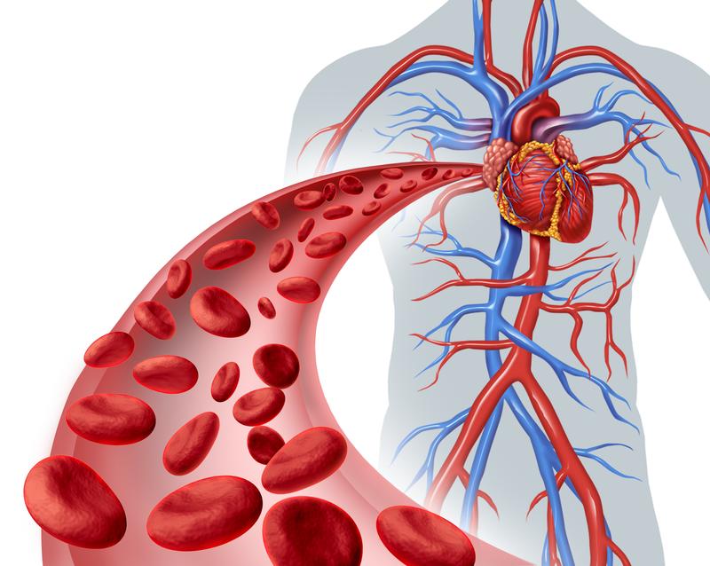 Тренировка для «периферических сердец» вашего организма