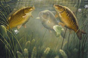 Рассказы о рыбалке...