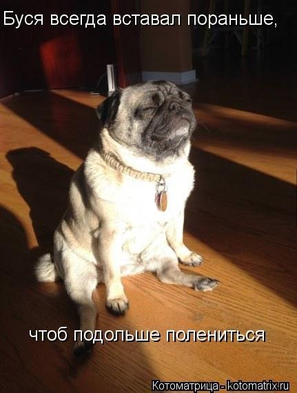 Картинки для настроения ч.4: фото приколы животных