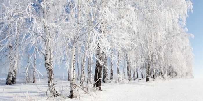 Какая зима будет в 2018-2019 году: что ожидают синоптики