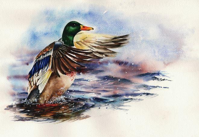 Peter Williams. Анимализм в акварели. Sitting Duck