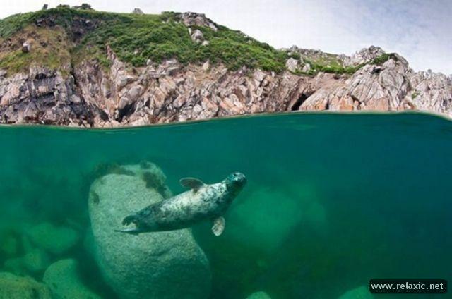 Лучшие фото дикой природы-2011 (32 фото)