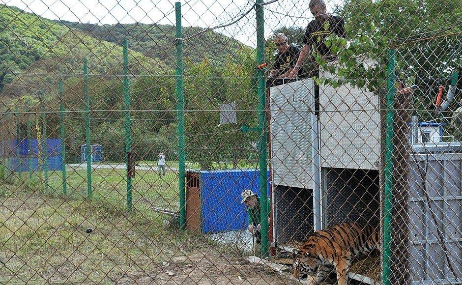 Директор зоопарка из Красноярска сам отказался от мандата депутата