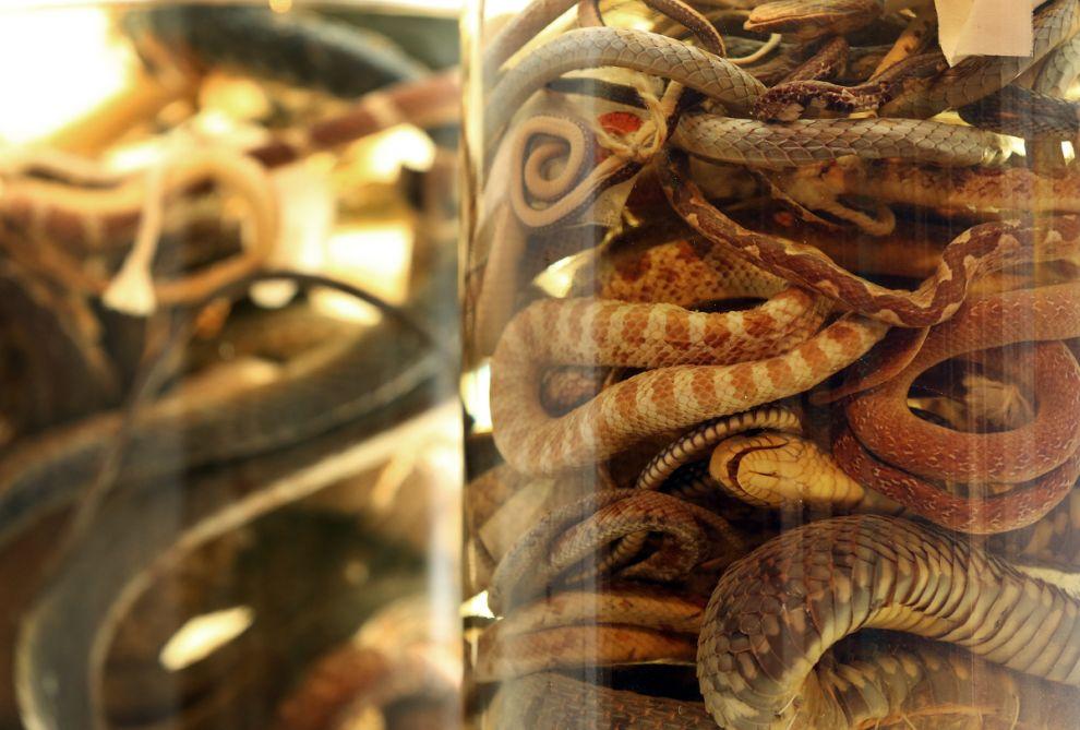 gmoz14 Лондонский музей зоологии и сравнительной анатомии Гранта