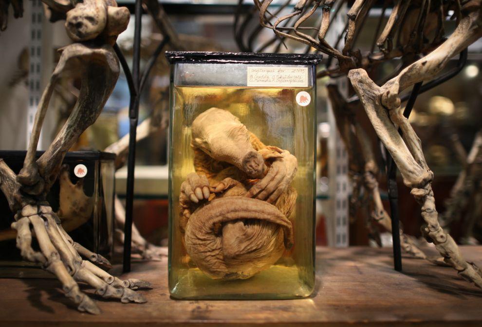 gmoz03 Лондонский музей зоологии и сравнительной анатомии Гранта