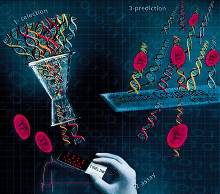 Интересные факты из мира генетики