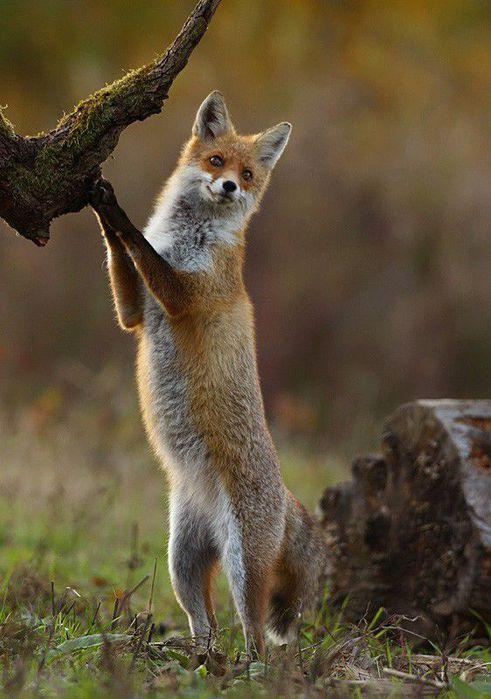 fox_20120409_00640_030 (491x700, 59Kb)
