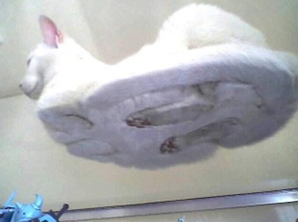 Нестадартый ракурс: 22 котика на стеклянных столах