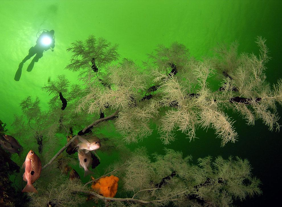 Цветы Медузы Горгоны