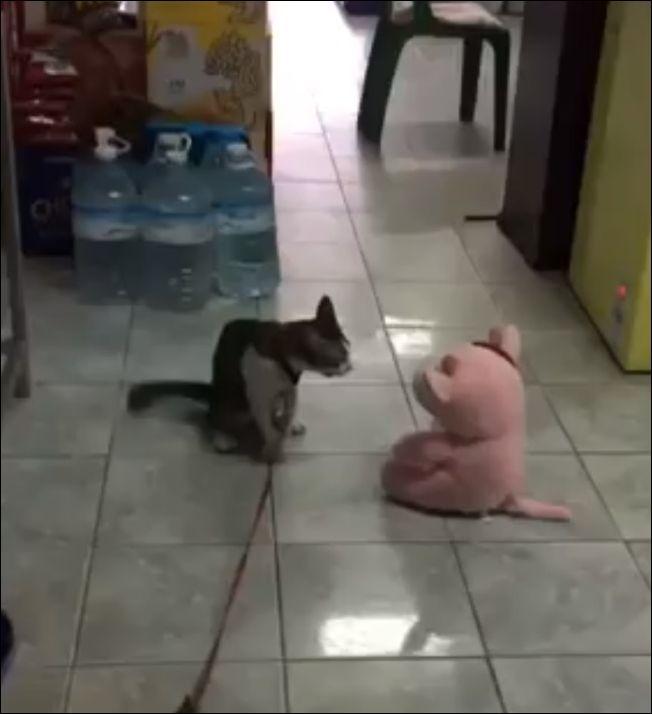 Сердитый кот напал на игрушку
