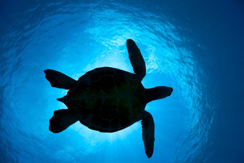 1261 Жизнь в океане   подводные фотографии Дэвида Флитэма