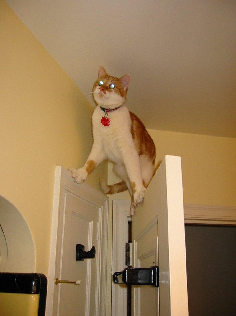Если у вас есть кот, ходить в цирк уже нет необходимости