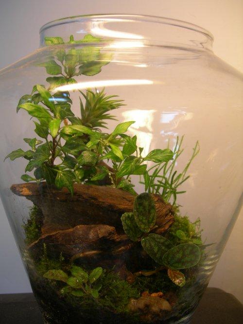 Сад в аквариуме уход за ними