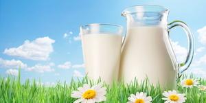 Молочные продукты и их кулинарные секреты