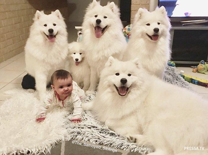 Два ребенка и четыре собаки в одной семье