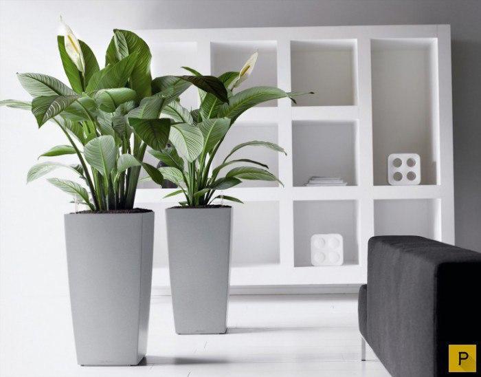 Растения — кондиционеры