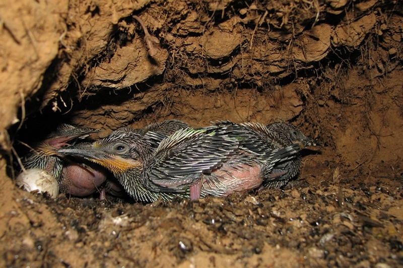 Редких птиц нашли под землей…