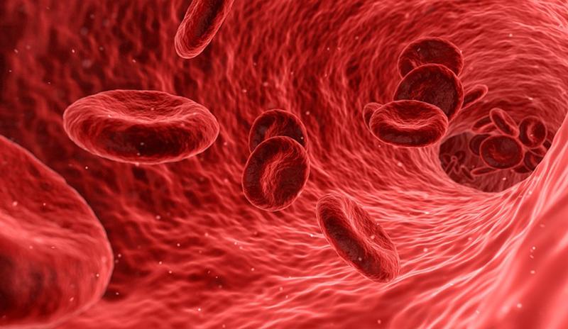 Золотая кровь: Самая редкая и ценная группа крови в мире