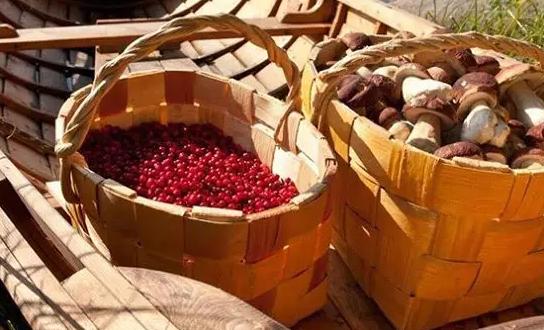 В Госдуму внесен законопроект о создании пунктов приема ягод, грибов и орехов