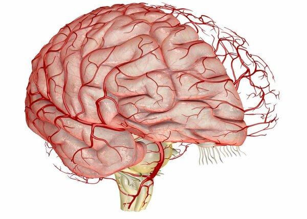 Улучшаем кровообращение головного мозга - лучшие продукты и народные средства