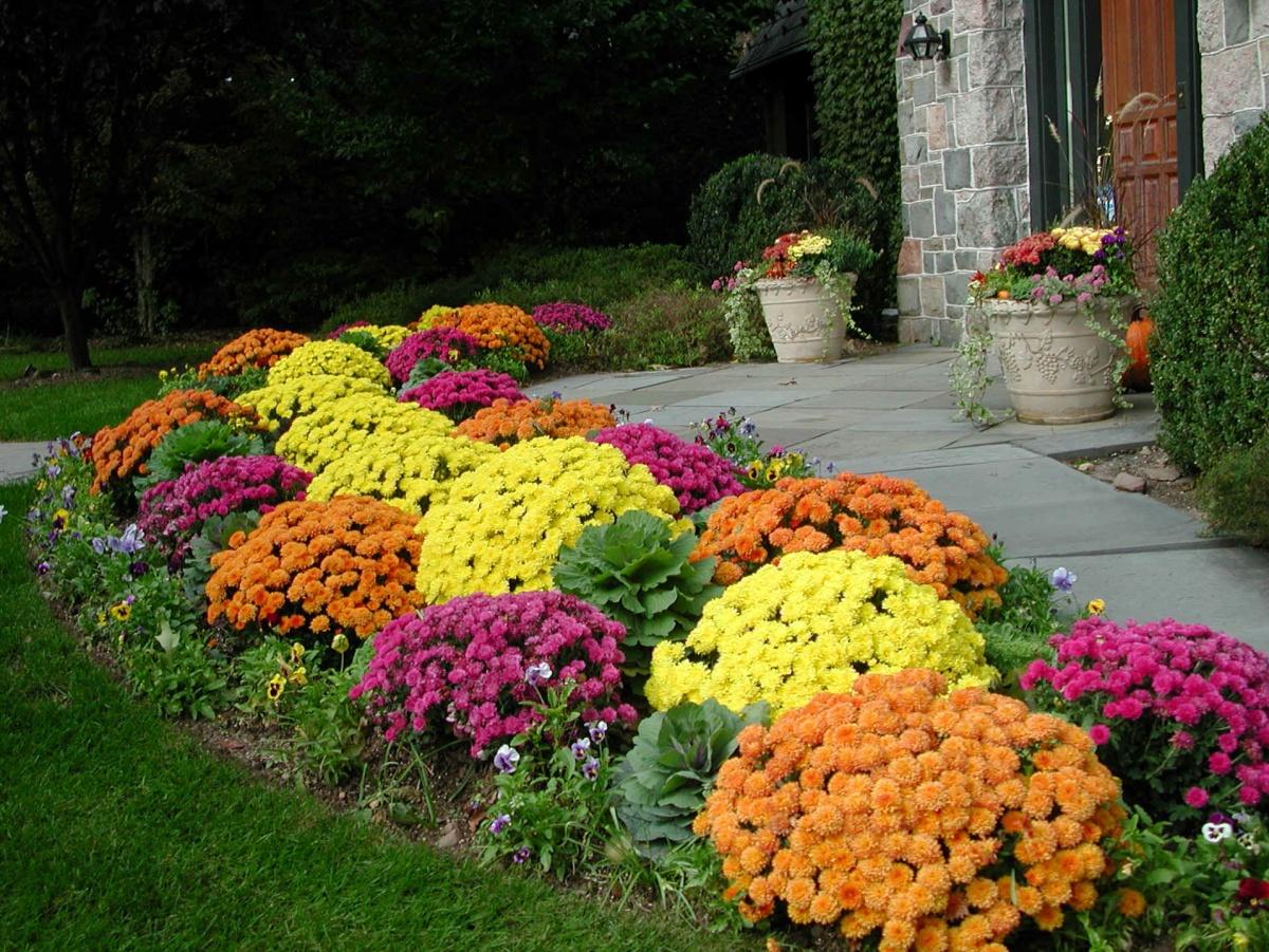 Посадка цветов в саду 5 фотография
