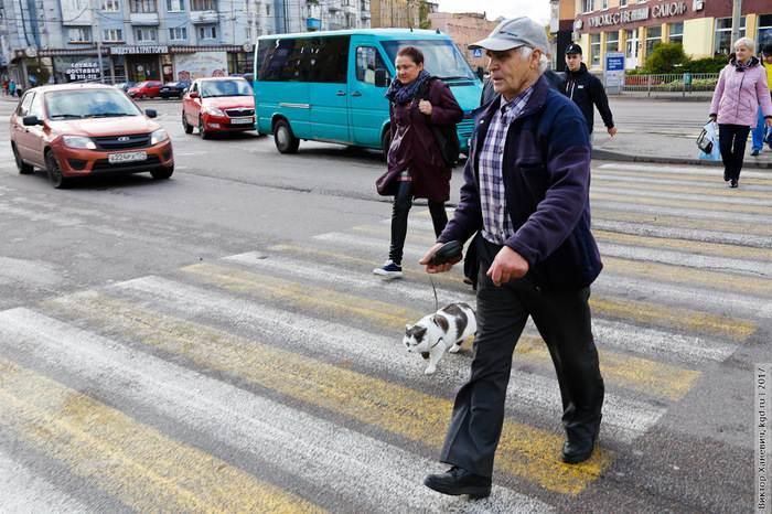 Самый умный кот Калининграда