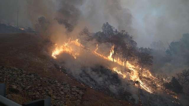 Из дыма вышли два уставших осла… Пожар уничтожил целый город, но эти двое выжили!