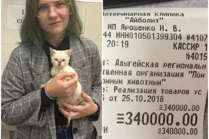 Оставленный в приюте котенок обошелся студентке в 340 тысяч рублей