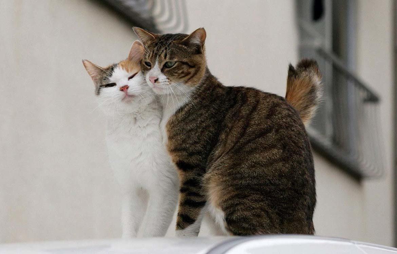 Кошачья нежность — фото, от которых тепло