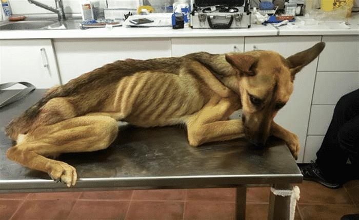 Все разводили руками, но он не смог дать этой собаке умереть…