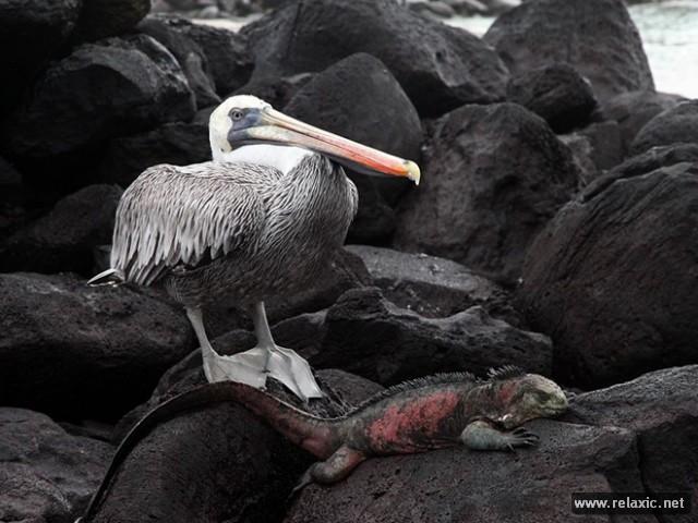 110 лучших фото-2012 от National Geographic (окончание)