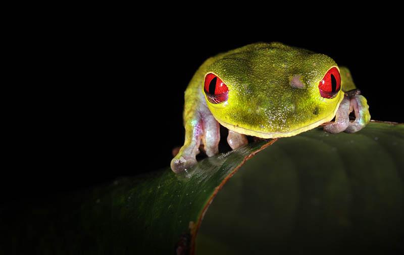 170 Несколько фактов о лягушках