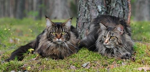Из кошачьей шерсти оригинальные вещицы