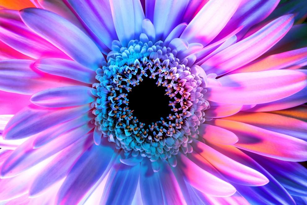 Психоделические цветы