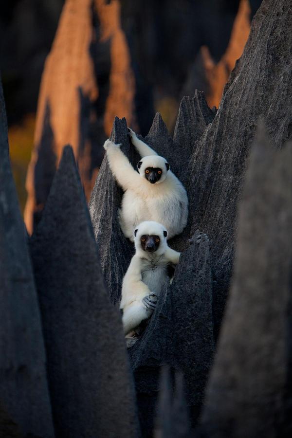 MM7820 090517 17444 Каменный лес на Мадагаскаре