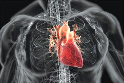 Сердце не просто орган, но и…