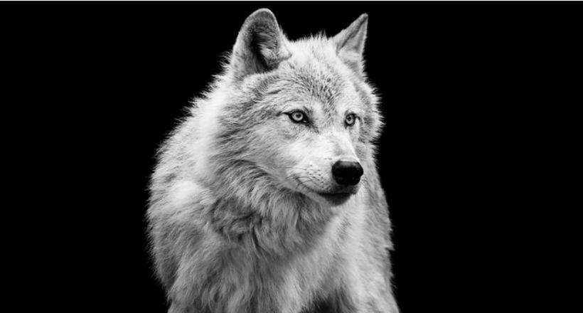 Красота дикой природы в фотография Троя Мота